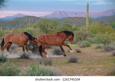 Two horses at the Tonto National Park in Arizona