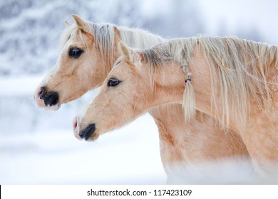 Two horses in winter