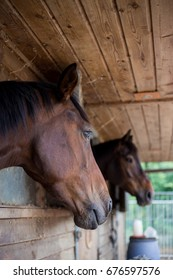 Two horses in a wooden stable, selective focus.