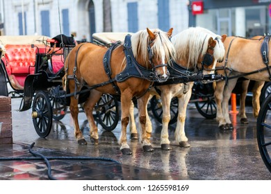 Two hourses and phaeton. A traditional travel in Izmir seaside with phaeton. They are waiting for travellers, in Gundogdu Square, Izmir City - Turkey.