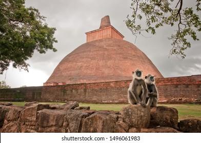 Two hulman monkeys sitting in front of the Jetavanaramaya Stupa located in the the historic city of Anuradhapura, Sri Lanka .