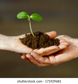 Two human hands holding green small plant