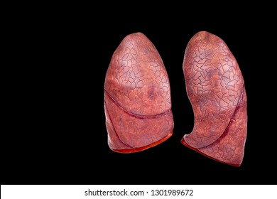 Two human lungs as models isolated on black background