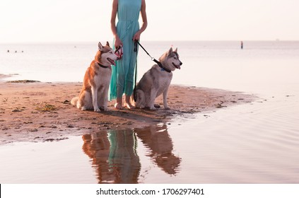Two husky dogs on a leash with a girl having fun, sunset golden light, on the sea, beach, outdoors