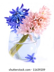 Two hyacinths