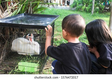 Two Indonesian children are busy watching two rabbit in the cage