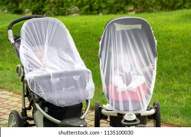 Two infant kids in strollers covered with protective net during walk. Baby carriage with anti-mosquito white cover. Midge protection for children during outdoor walking season
