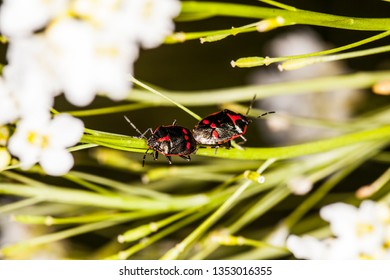 two insects are copulating on the grass