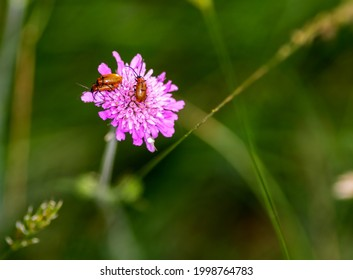 Two Insects reproducing on a pink flower