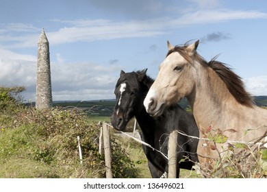 two Irish horses and ancient round tower in the beautiful Ardmore countryside of county Waterford Ireland