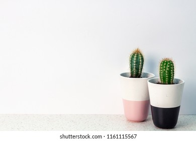 Two isolated cactuses in pots are standing on a terrazzo table against a white blank copy space wall