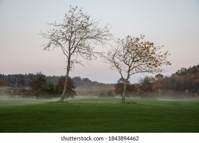 Two isolated trees on a field against an evening sky. There is mist on the field