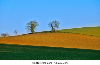 Two isolated trees on the horizon with a palette of different colored field
