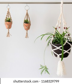 Two jute twine mini macrame plant hangers beside a bigger acrylic macrame hanger with beads. A spider plant is in the larger acrylic plant hanger.