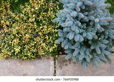 Two kind of bushes. Pine and Leafy.