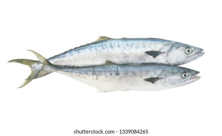 Two king mackerel fishes isolated on white background