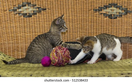 Two kitten are playing with a felted ball and wool.