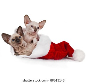 Two kitten in Santa hat on a white background