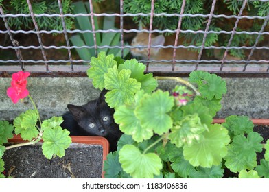 Two kittens - black and yellow - hiding in garden plants