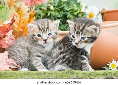 two kittens with flowers and pots on green surface