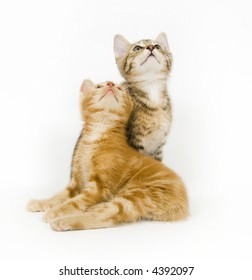 Two kittens look to the sky on a white background