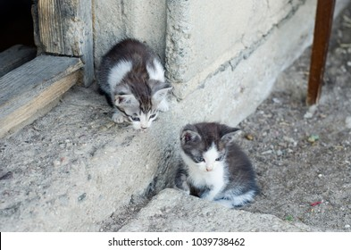 Two kittens on the barn treshold