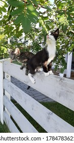 Two kittens on a fence