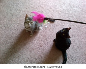 Two kittens, one grey tabby, and one black staring intently at a bright pink feather cat toy.