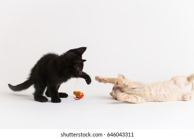 Two kittens play together with a cat nip toy
