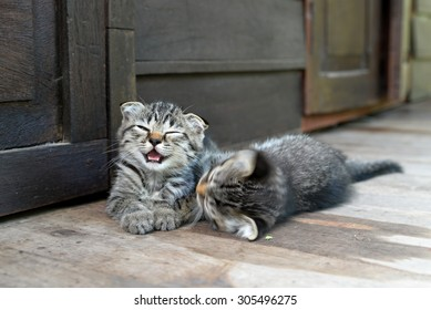 Two kittens playing