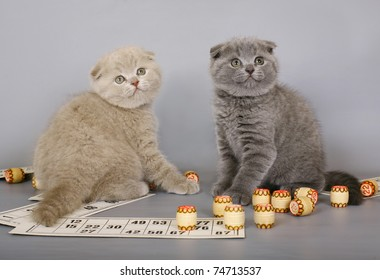 Two kittens playing in a bingo.