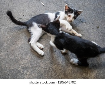 Two kittens are playing happily