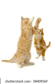 Two kittens are playing on a white background.