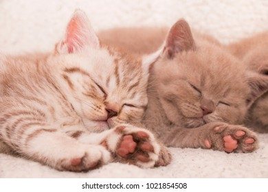 two kittens resting sleeping