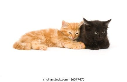 Two kittens settle in for a quick nap on a white background