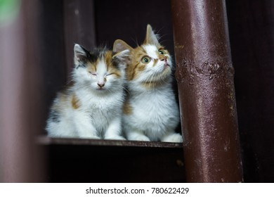 two kittens sit on a shelf in a cage in an animal shelter