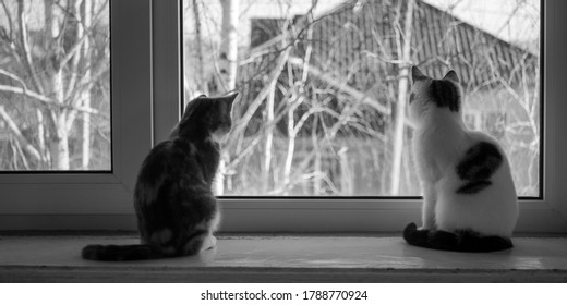Two kittens sitting on the windowsill. Cats look out the window. BW photo