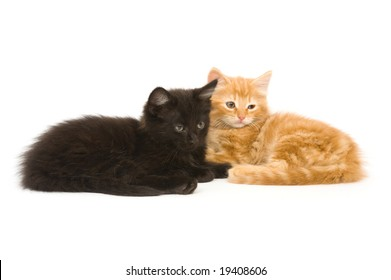Two kittens sitting together on a white background