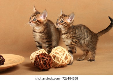 Two kittens in a strip of tabby near decorative wooden balls