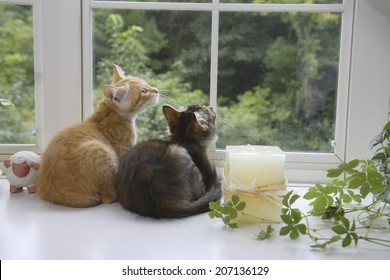 Two Kittens Watching Outside By The Window