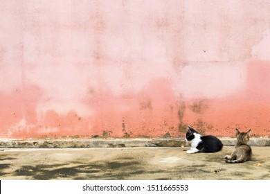 zwei kitty-Katzen-Ruhe und spielen auf dem Fußboden Hintergrund Zementwände