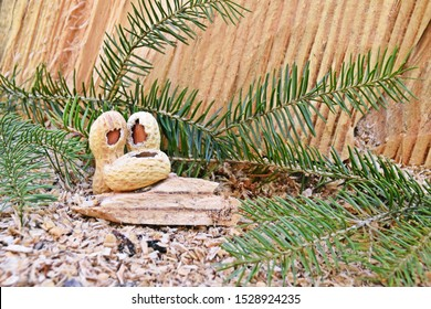 Two large peanuts and a small one are lying on a wooden surface in the forest, one piece has been broken out of the shell, the peanuts look like the nativity scenes of Mary, Joseph and Jesus at Christ