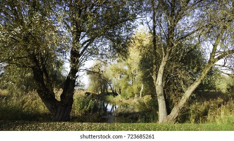 Two large trees at the lake with yellow trees at the background