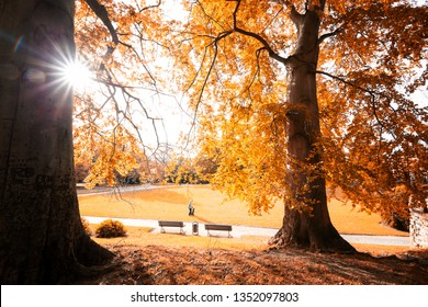 Two large trees with a magnificent crown of Tree beams in the autumn light