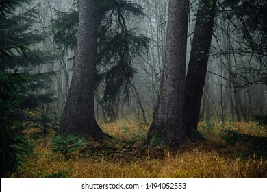 Two large trees surrounded by fog in the dark mystical forest