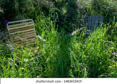 Two lawn chairs sit in an overgrown garden in the morning sun, Victoria, British Columbia