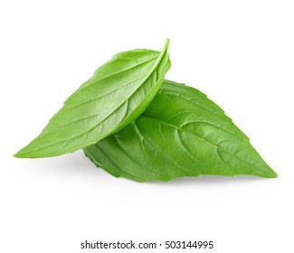Two leaf of basil isolated on white