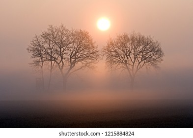 two leafless trees in the morning light with fog and rising sun