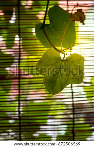 Two Leaves on the Venetian Wooden Blinds