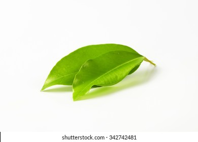 two leaves of orange tree on white background